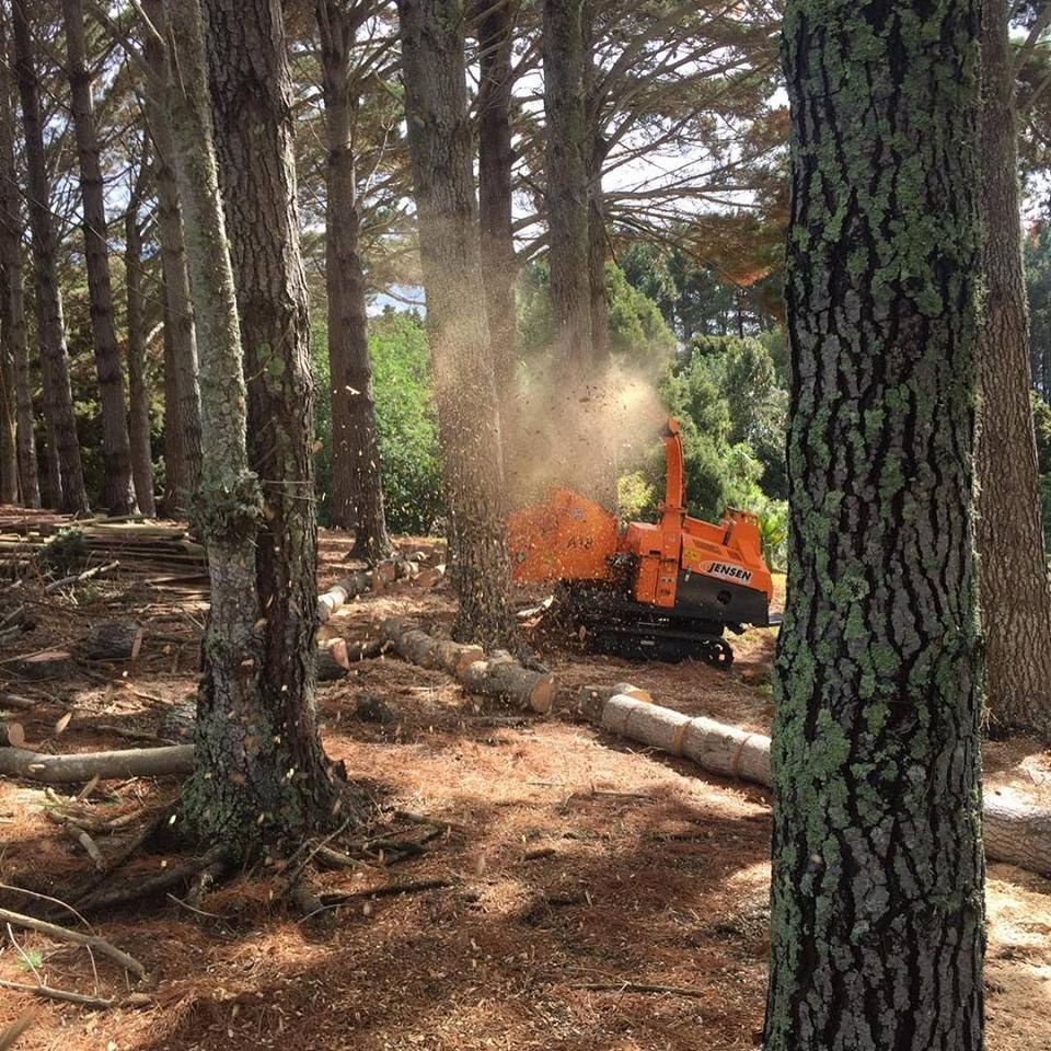 A18-in-trees-chipping